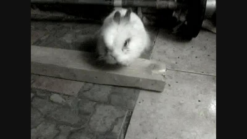 кролик убийца