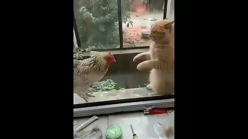 Петух и Кот