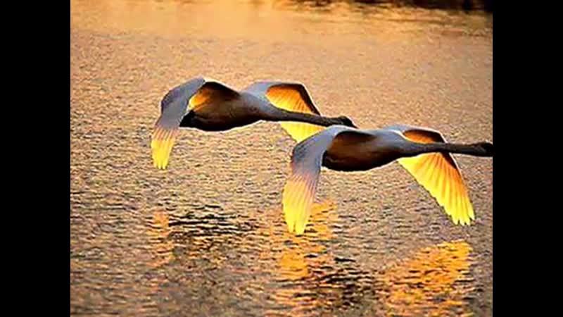 James Last Orchestra - Lovebird(愛情鳥)