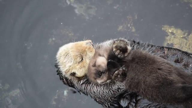 На руках у меня засыпай