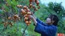 吊柿饼It's a red mountain, and in the fall, it's natural to make some sweet persimmons.Liziqi channel