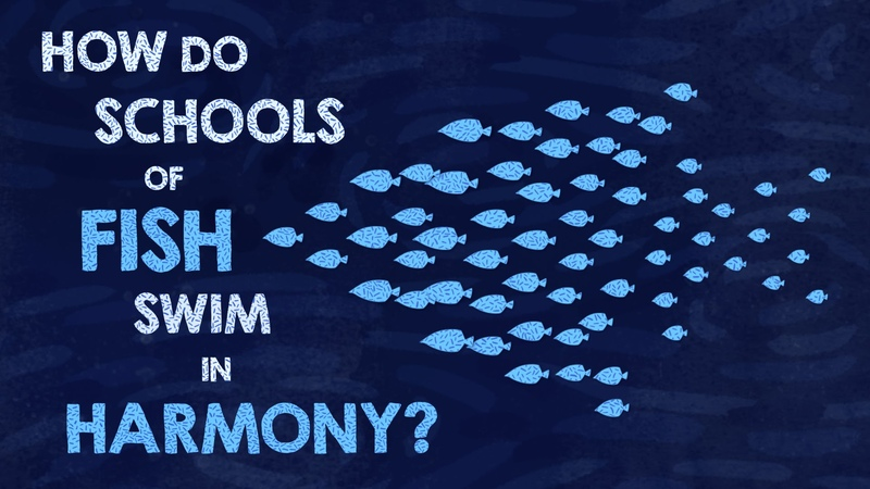 How do schools of fish swim in harmony - Nathan S. Jacobs