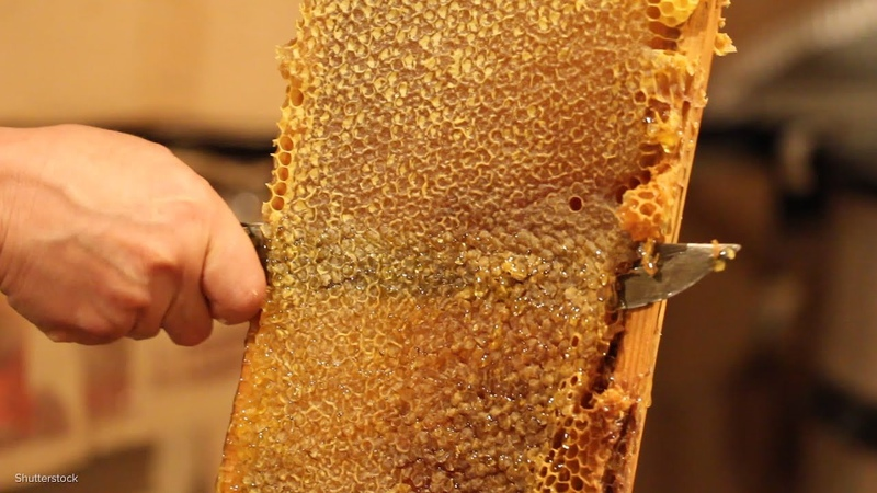 Honeycomb Is Mesmerizing