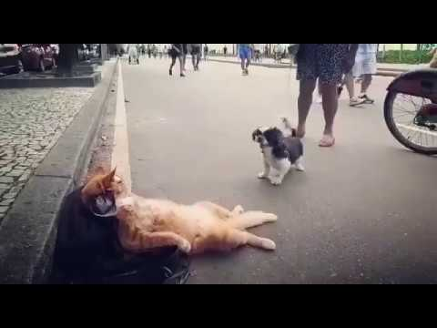Cool Cat Has no Time to Play with little Dog