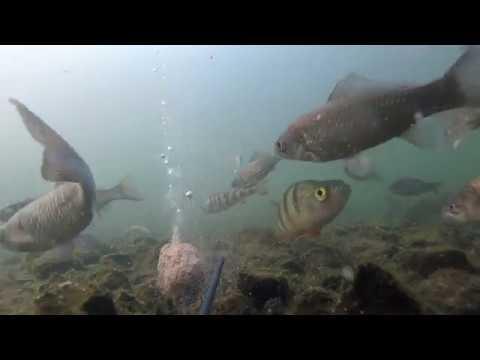 Тестирую супер таблетку шипучку на карасях зимой , подводное видео