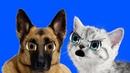 Смешной Шуточный Бой Котёнка с Овчаркой! Приколы с кошками