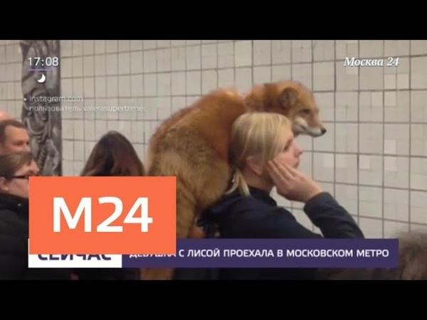 Девушка с лисой проехала в московском метро - Москва 24