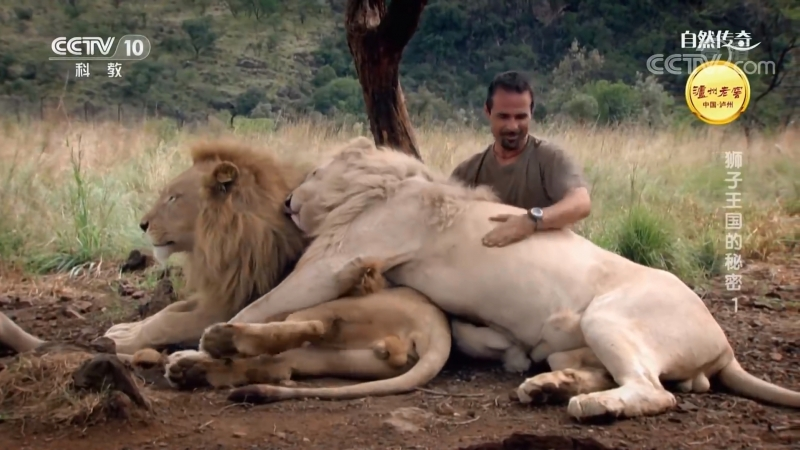 《ЧЕЛОВЕК ЛЕВ》02 Как Выжить в Королевстве Белых Львов Кевин Ричардсон и его львиный прайд