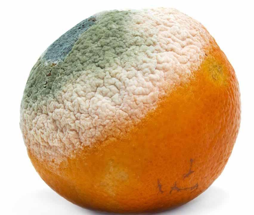 Апельсин с плесенью на нем.