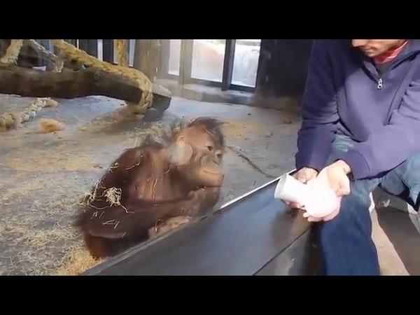 Смешной фокус для обезьянки