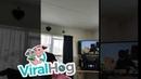 Собака любит смотреть телевизор || ViralHog