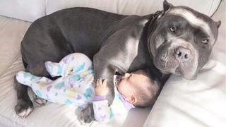 Cutest Dogs Babysitting Baby - Funny Baby Video