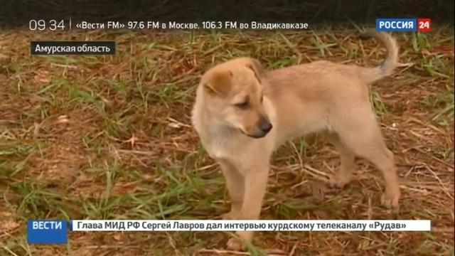 Новости на Россия 24 • В Амурской области дальневосточные гектары все чаще берут оптом