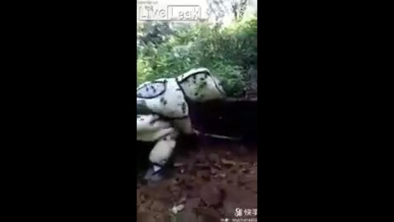 В Китае мужчина решил устроить танец с шершнями. А они его зажалили насмерть.