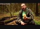 Михаил Вишневский Ложные опята которые все считают ядовитыми отличные съедобные грибы 720p