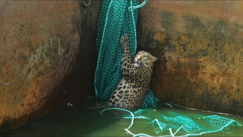 Люди спасают попавших в беду диких животных. Часть 2