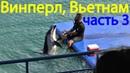 Морские котики и дельфины в парке развлечений Винперл в Нячанге, Вьетнам