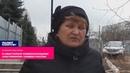 В Севастополе коммунальщики расчленили березку, как бандеровцы расчленяли людей на лесопилках!