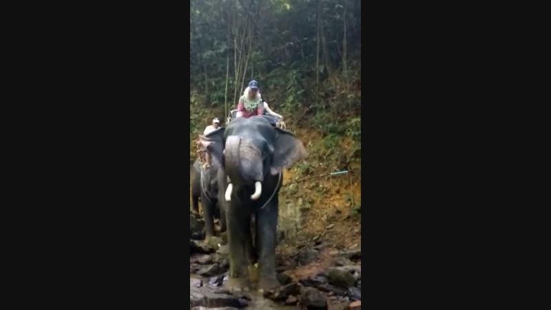 Прогулка на слонах в Джунглях Тайланда