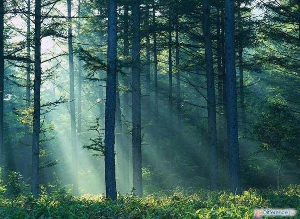 Разница между рощей и лесом в нашем восприятии Для жителей России леса и рощи не являются экзотикой над каждым из нас, хоть раз в жизни, смыкался их прохладный зеленый полог. Там и там деревья