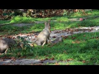 В зоопарке Калининграда родилась патагонская мара