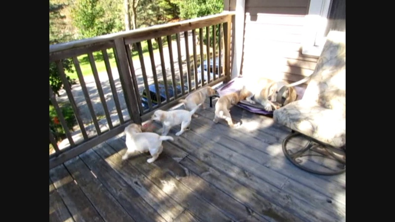 Puppy party3
