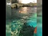 В Торонто неадекватный мужчина решил искупаться с акулами