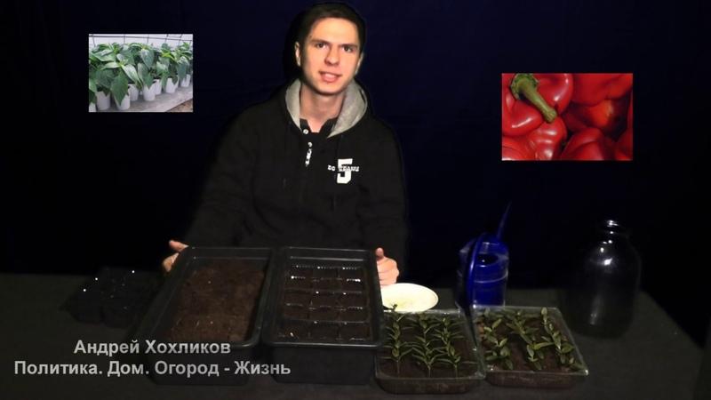Андрей Хохликов Вторая волна посева сладкого перца