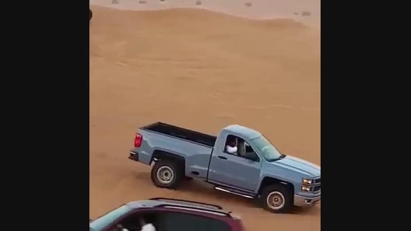 Arab safari