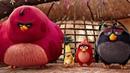 Курсы управления гневом. Ред знакомится с другими злыми птицами. Angry Birds в кино. 2016