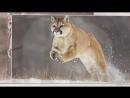 В мире животных Paul Mauriat Alouette