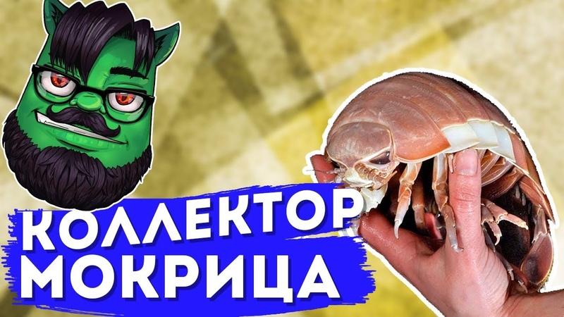 Коллекторша Мокрица — пранк by Евгений Вольнов