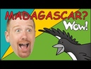 Steve and Maggie in Madagascar MORE, 12 mins | Songs for Kids | Wow English Story for Children