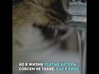 Как котов готовят к съемкам