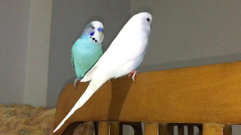 Mavişin Yeni Eşi Aldık kabul ettik)