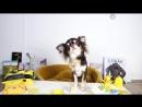[Magic Pets] ШКОЛА КОТОВ И СОБАК ВОЛШЕБНЫЕ ПИТОМЦЫ ДВОЕЧНИКИ КИСА АЛИСА И ЮМИ ЧУ СРЫВАЮТ УРОКИ