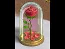 Вечный цветок Клондайк