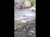 Белая ворона в Саратове