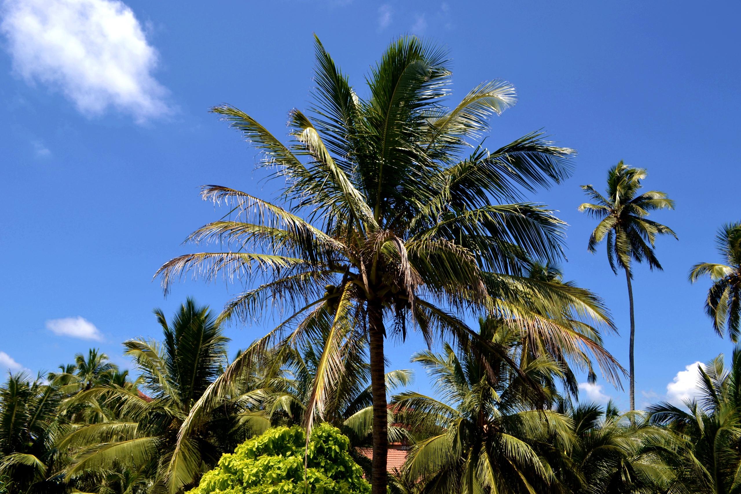 Шри Ланка (фото) IA7-GnBIRHk