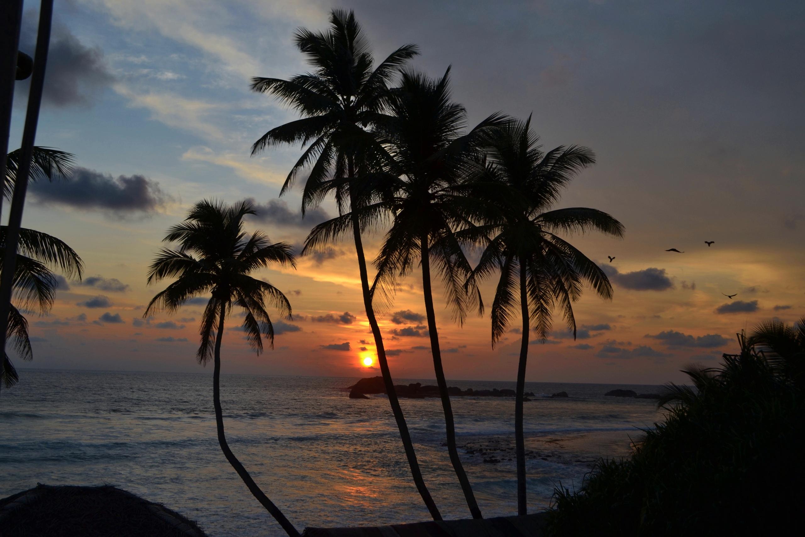 Шри Ланка (фото) KQ31UggFv3E