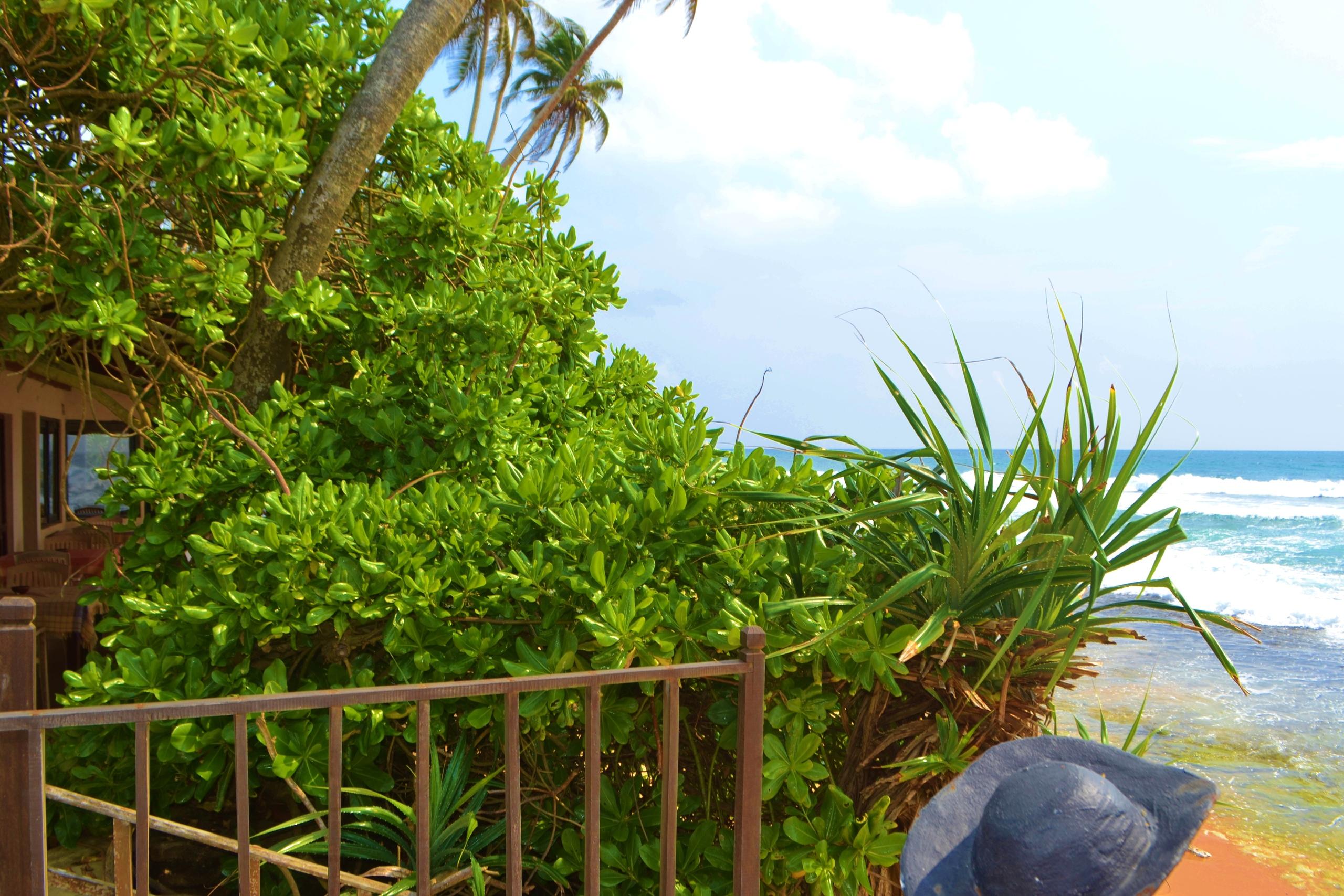 Шри Ланка (фото) 3j65dHu7x2w