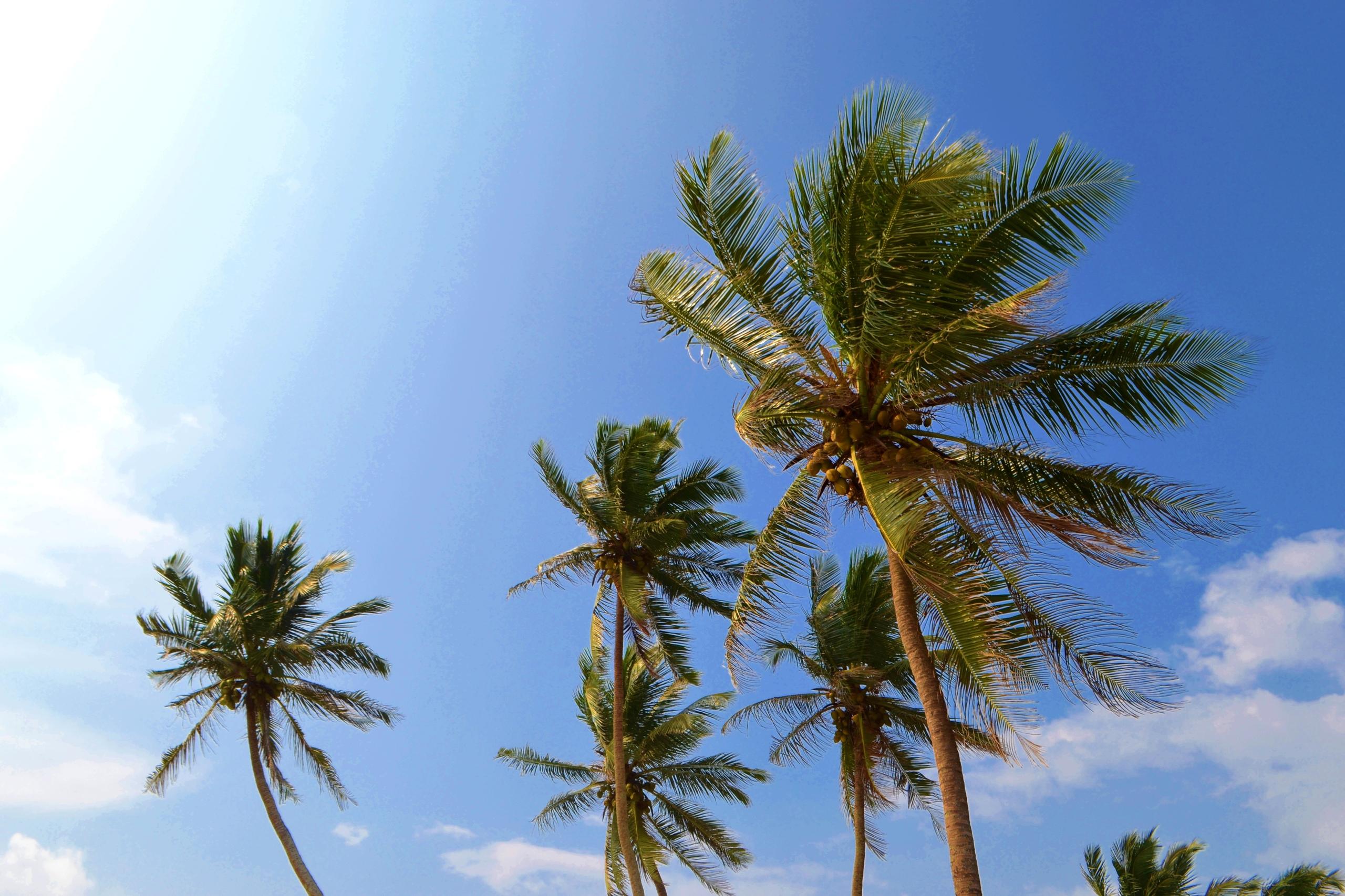 Шри Ланка (фото) MVGeDyiEnB4