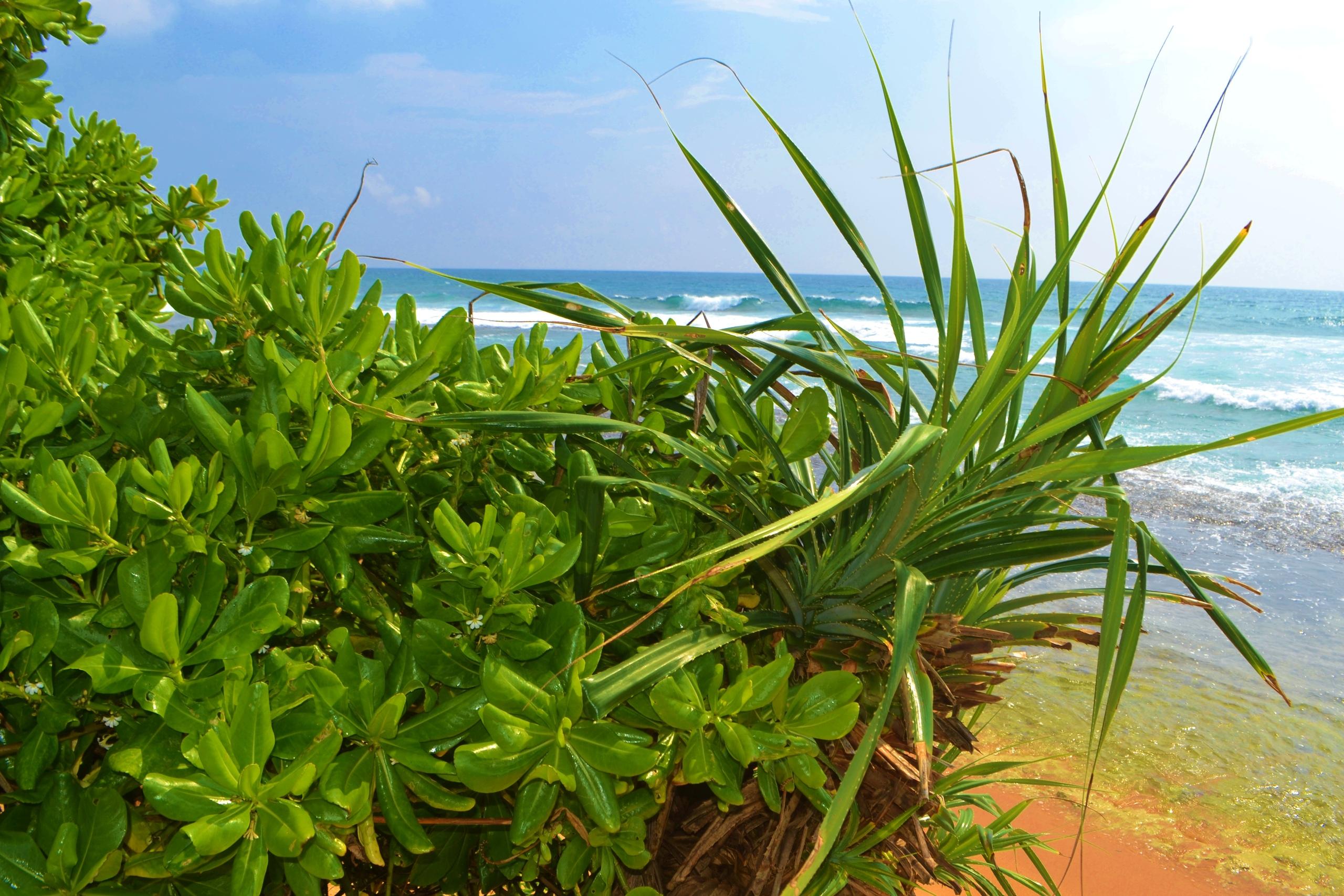 Шри Ланка (фото) DhTQMUNGO1c