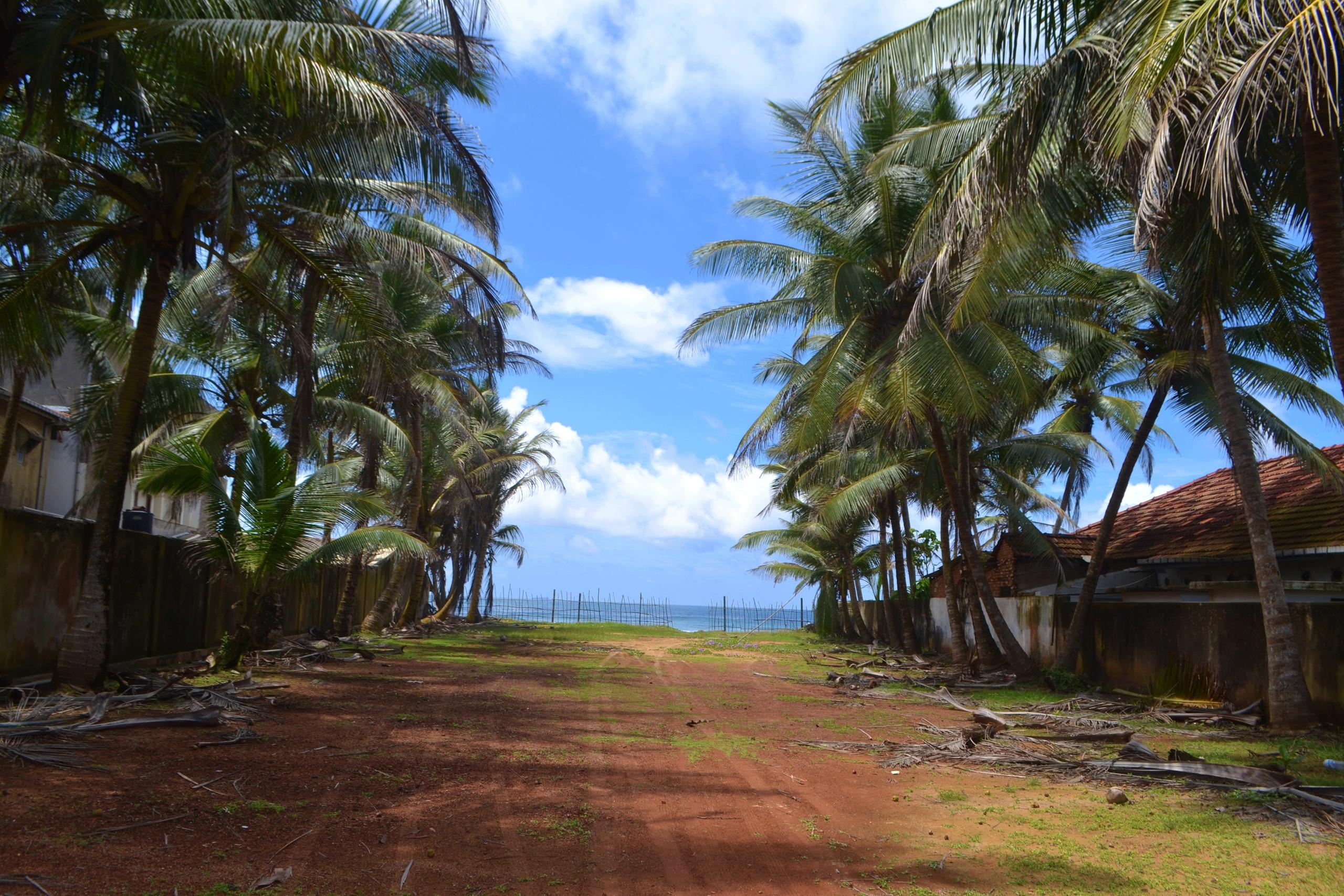 Шри Ланка (фото) JAt-Cnlgi98
