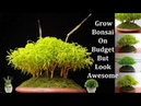 How to Make Bonsai on a Low budget How to Grow Bonsai Easy Way GREEN PLANTS