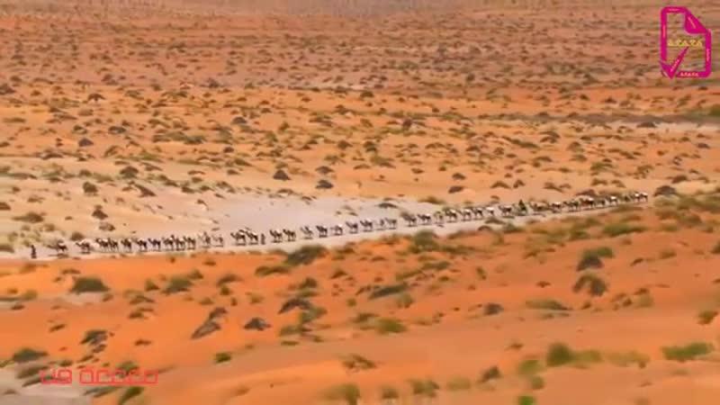 Халиджи музыка Arabian desert 🌵