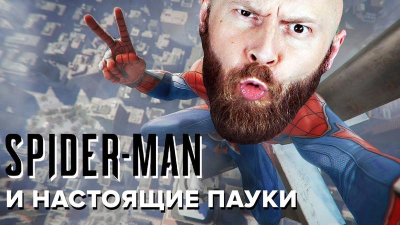ИгроСториз: Spider-Man и реальные арахниды