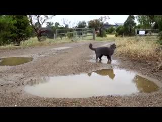 Вот такой деревенский котик из параллельной вселенной - vk.com/cottagers