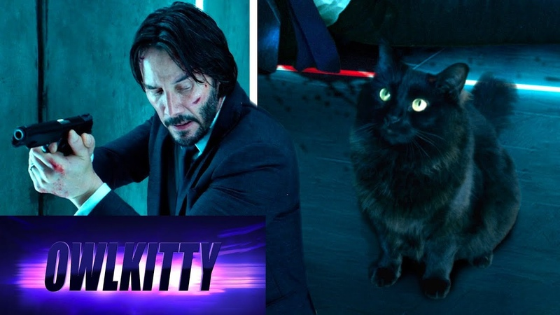 When your cat is a trained assassin John Wick