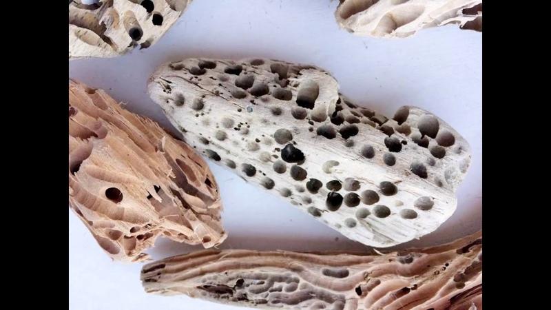 Driftwood или морские деревяшки и что с ними делать